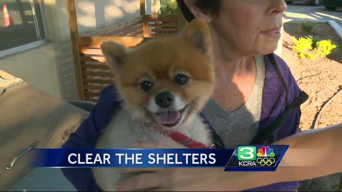 Hundreds of animals adopted during 'Clear the Shelters' event