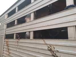 Horses being evacuated belong to a couple on honeymoon in Hawaii and some friends came to help get them to safety.