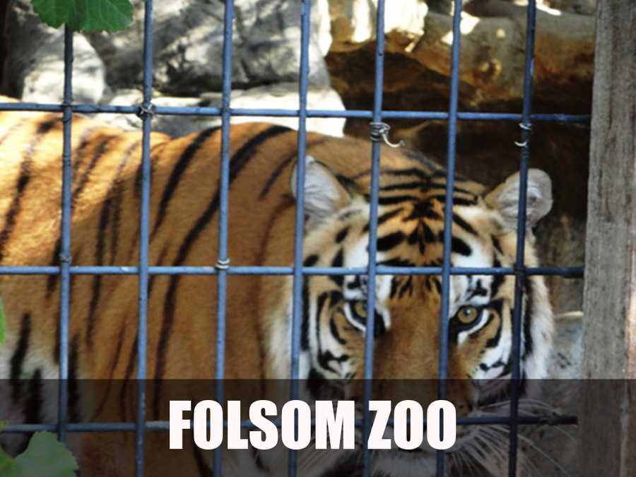 According to the website, the mission of the Friends of the Folsom Zoo Sanctuary, Inc., is to preserve and enhance a city treasure by assisting in the enrichment of the lives of the animals living at the Folsom City Zoo Sanctuary. (Source: http://folsomzoofriends.org/)