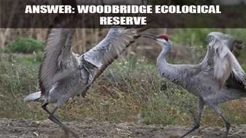 Sandhill cranes, Canadian geese, snow geese, tundra swans and many other birds claim the reserve as their home during the fall and winter months.