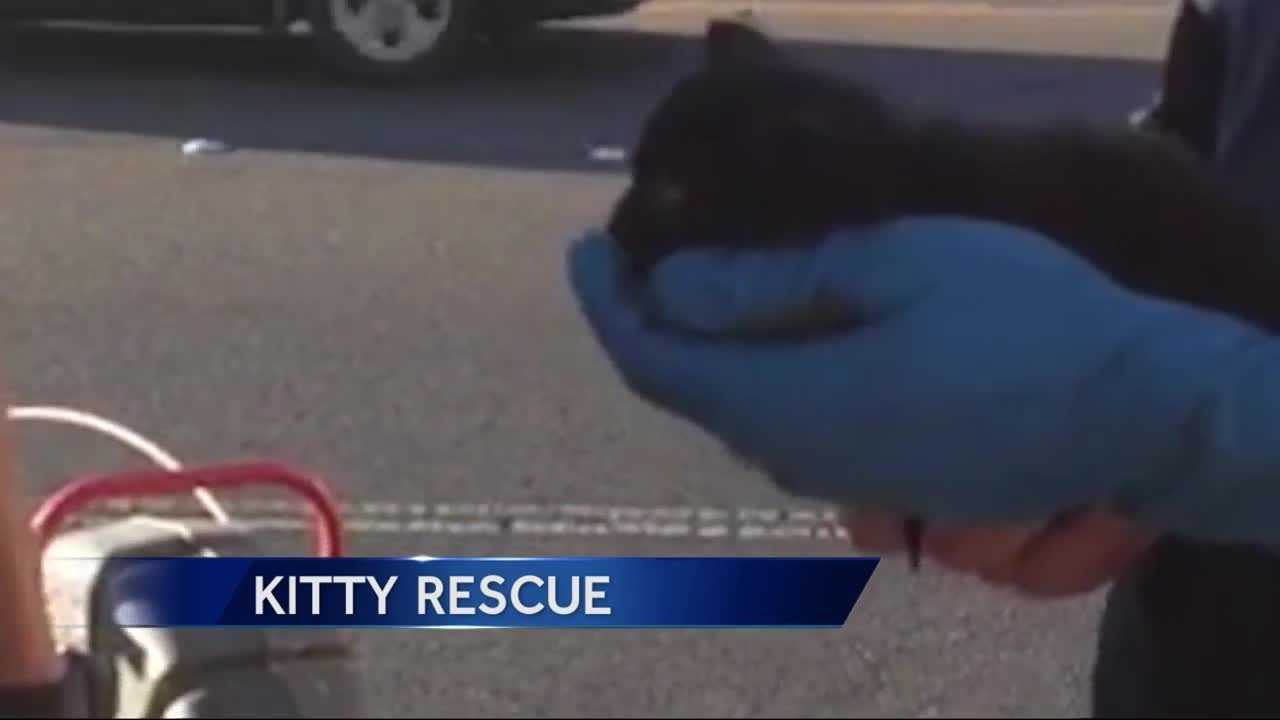 A kitten trapped in a storm drain in Citrus Heights now has a forever home thanks to the work of first responders, a plumber and an officer looking for a cat to add to her family.