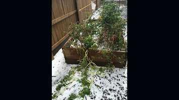 Hail in Roseville backyard