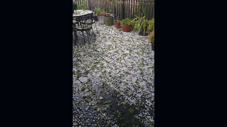 Another Roseville backyard covered in hail