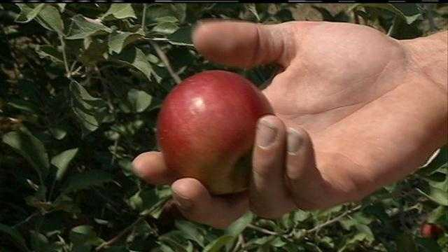 6pm Apple Orchard-PKG