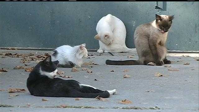 An Iowa town gives a longtime resident 60 days to get rid of a colony of feral cats.