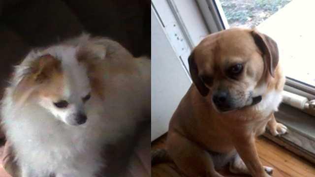 dogs-poisoned-111512.jpg
