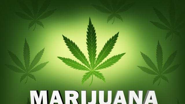 Marijuana - pot leaf