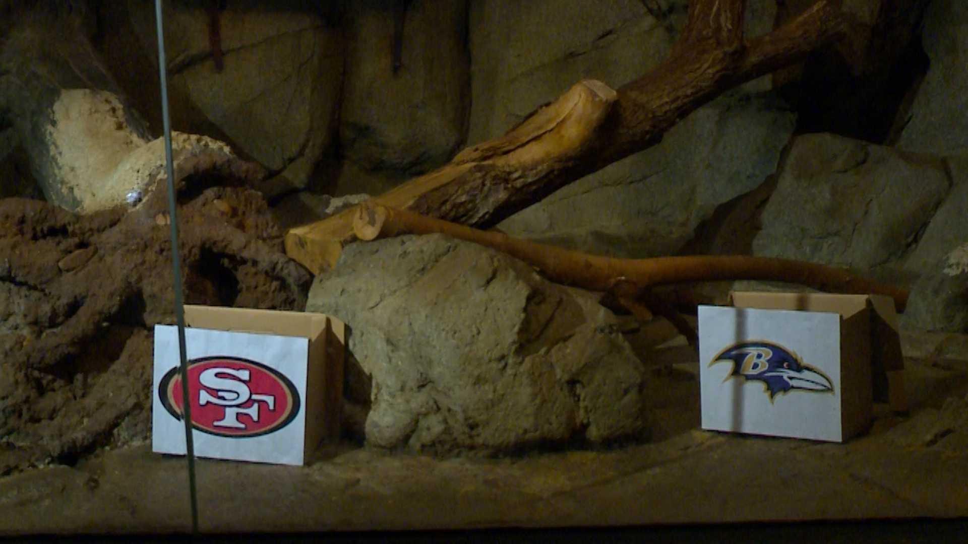 Zoo Super Bowl