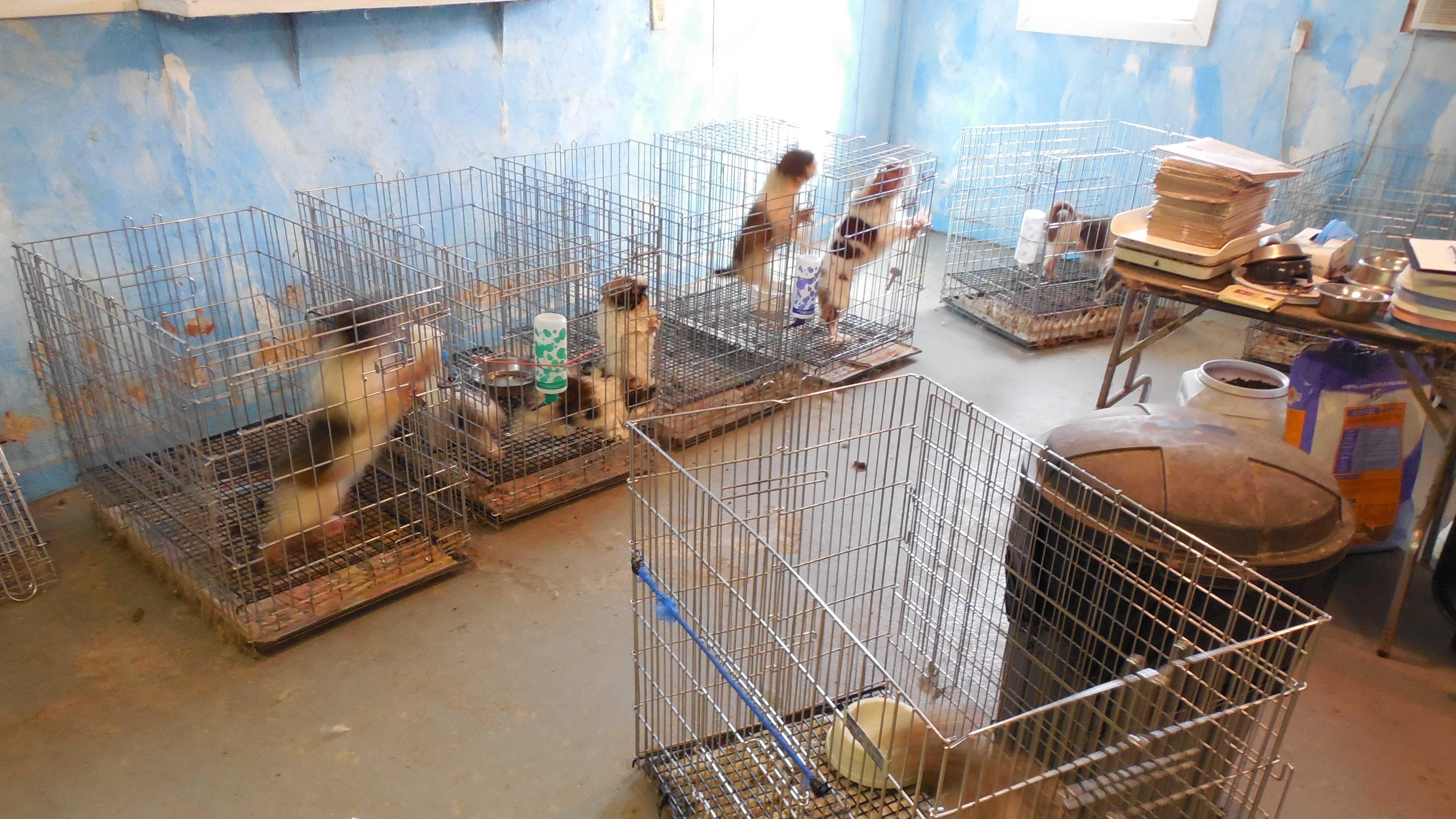 PHOTO: dogs seized