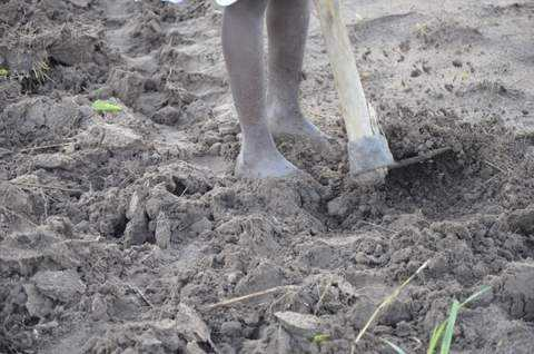 The land here is very fertile. The top soil goes down four feet.