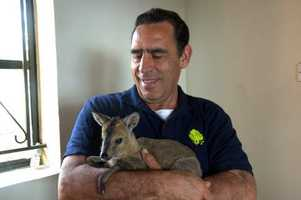 John Bueno with a baby antelope