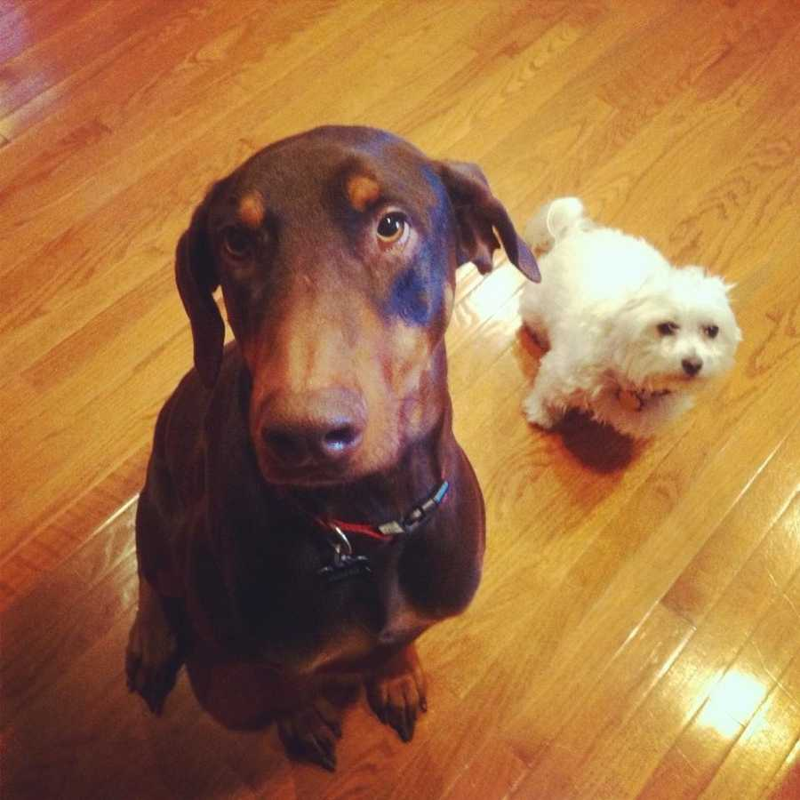 """""""My husband and I have two pups: Boston, our 5-year-old Maltese, and Cooper, our 3-year-old Doberman."""""""