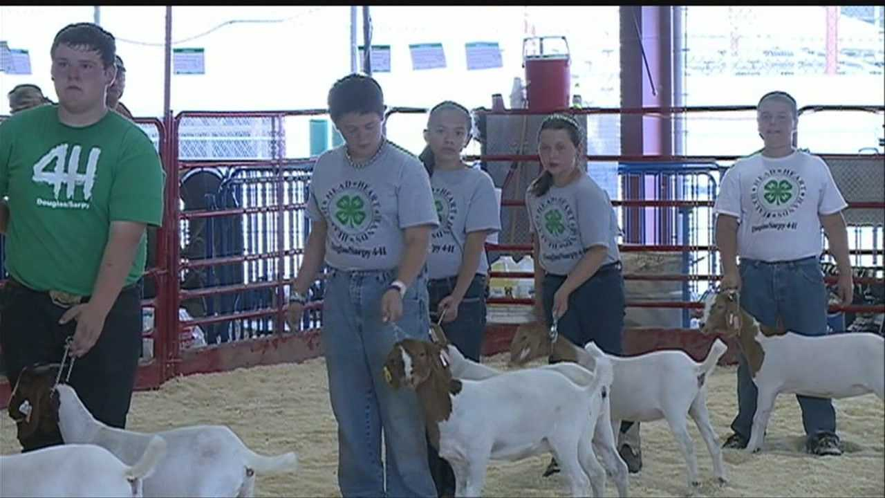 To say that the Sarpy County Fair is a busy time for 4-H participant Catherine Jones might be an understatement.