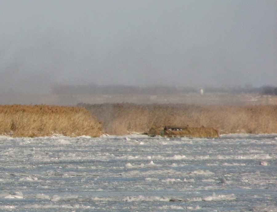 Picture of the camouflage boat used by the hunters to get to the marsh island in the middle of the river.
