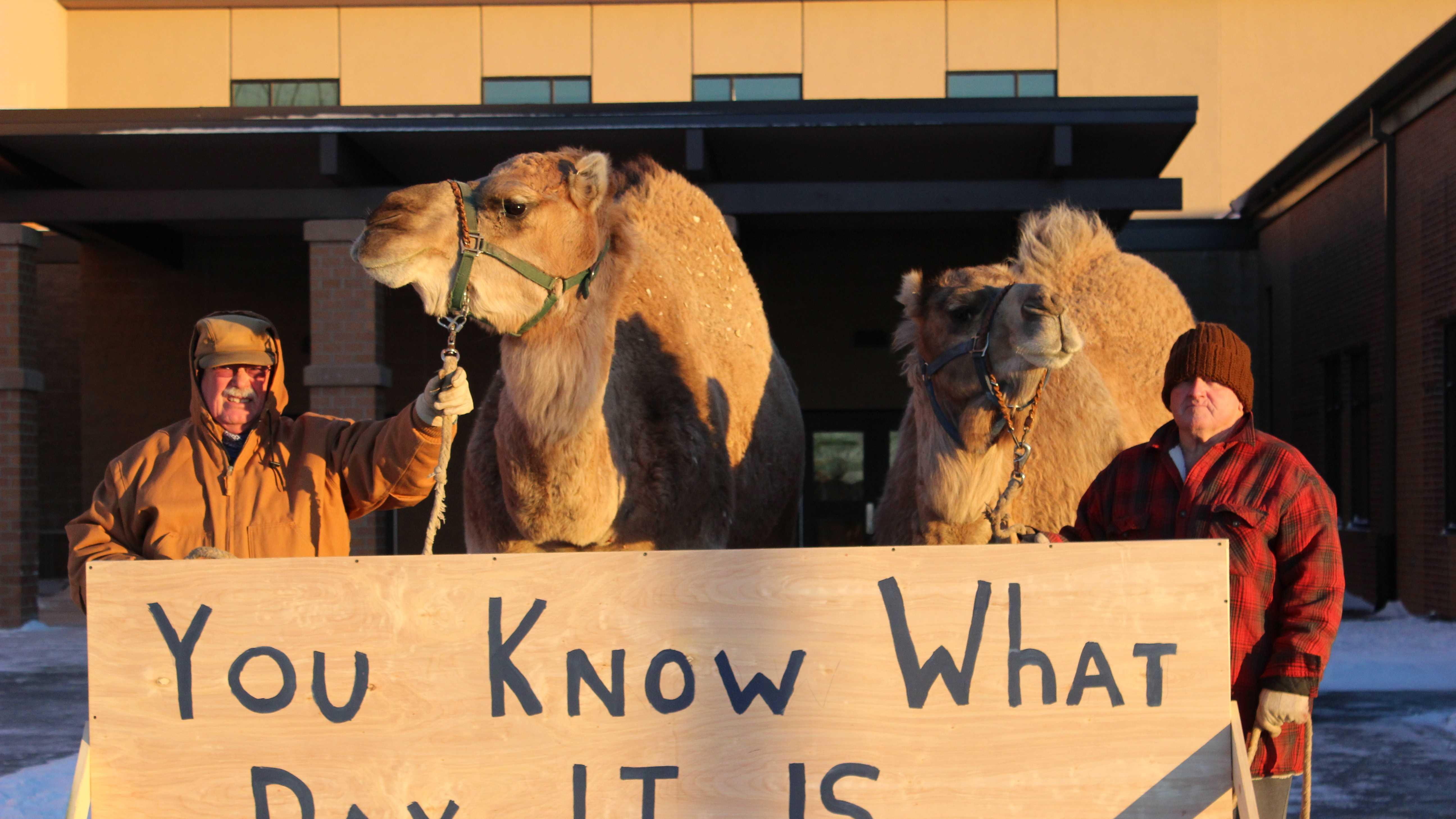 Concordia Camel