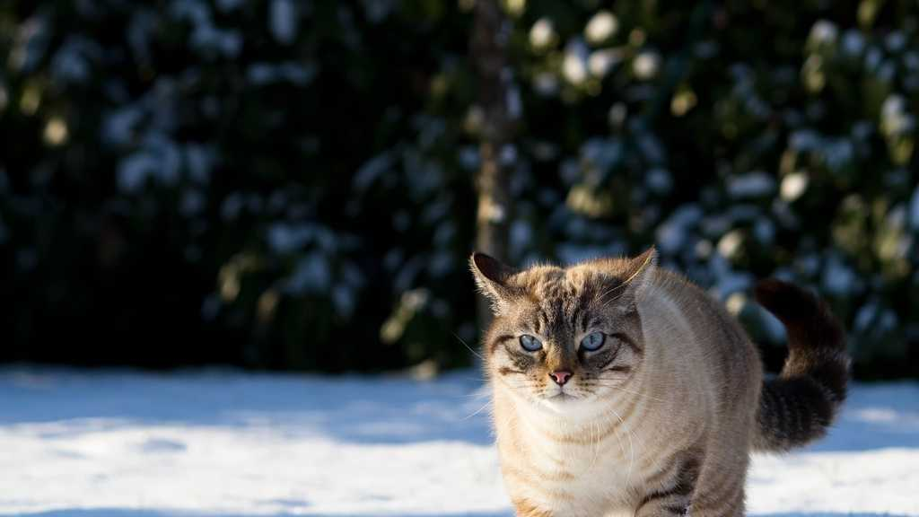 cat in snow.jpg