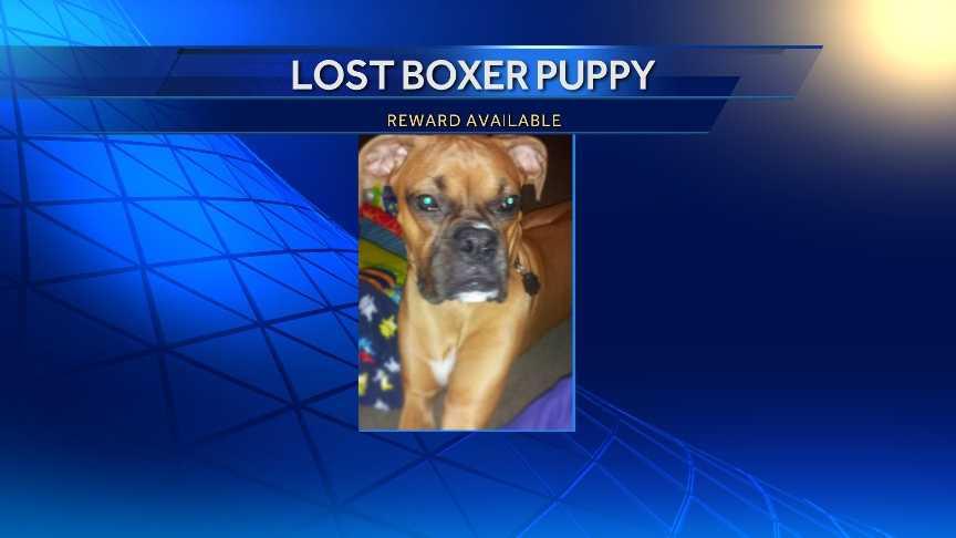 Missing boxer