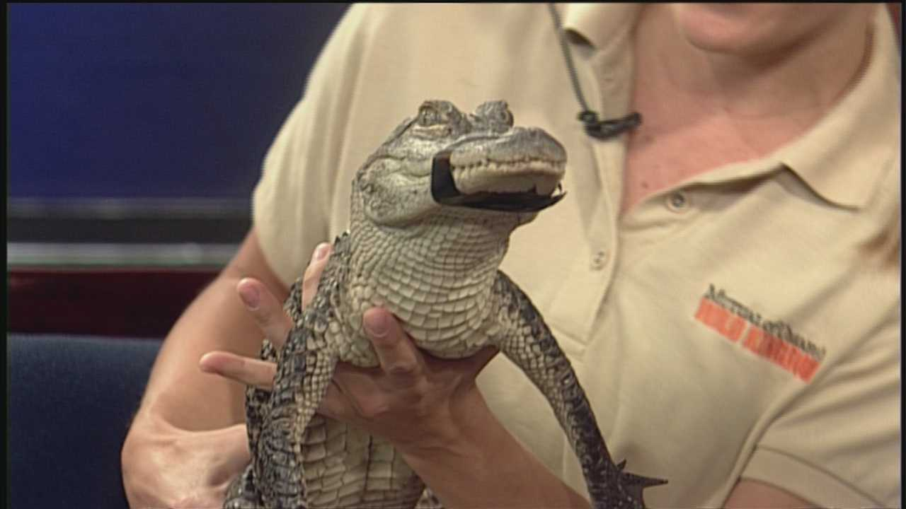 You never know what you'll find in the wild -- or on the set of First News.