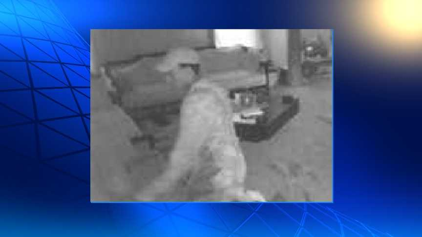 Security camera photo of suspected gun burglar from home near 24th & Kansas Ave