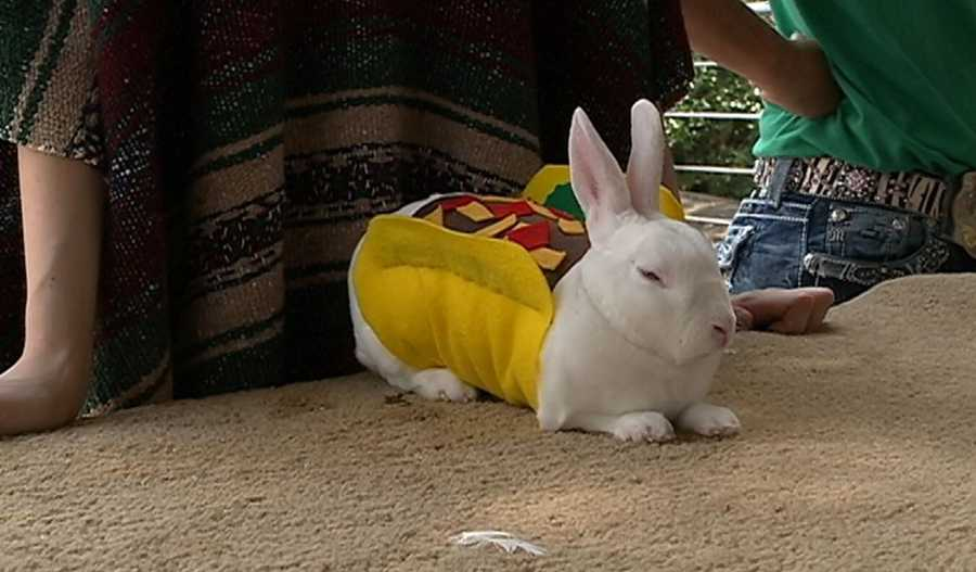 ... but it's really just a rabbit dressed up as a taco.
