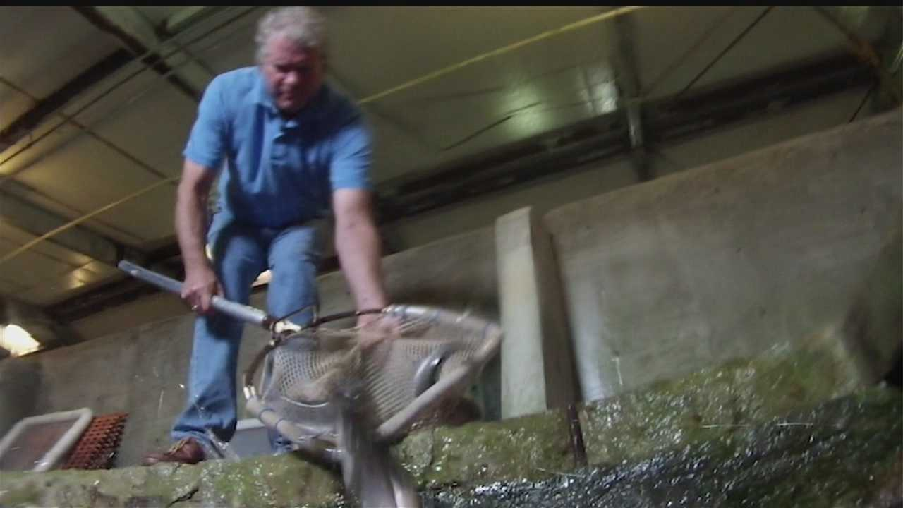 We're getting exclusive access to the state's trout business.