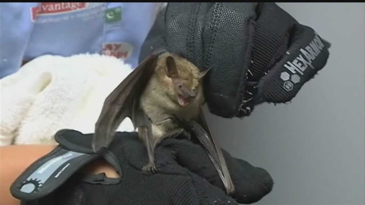They're worried an infant may have been exposed to the bat.