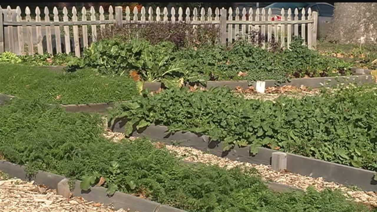 Plan for old landfill could be popular with urban farmers