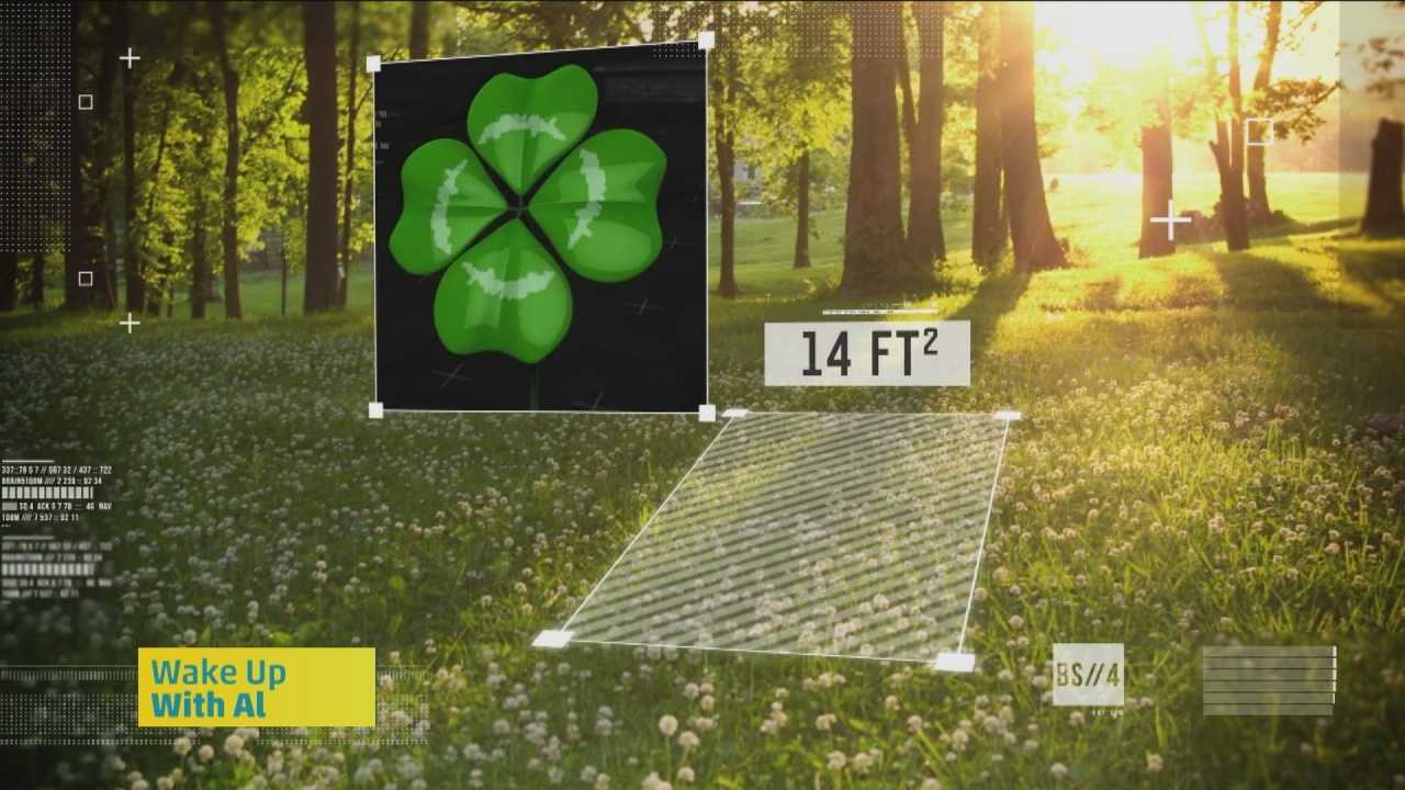 How does the fourth leaf get on the clover? Sam Champion has the details.