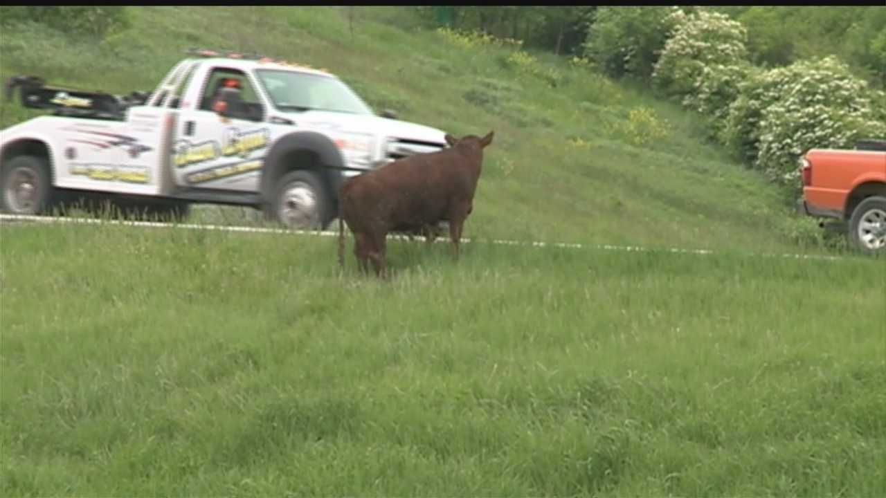 Animals loose after cattle truck overturns on I80 east, 680 west near Neola, Iowa.