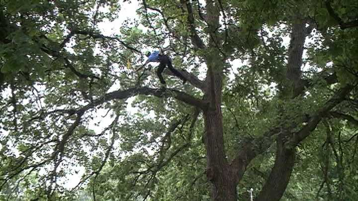 Professional arborists from across seven states took to the trees in Hanscom Park for a tree-climbing competition Saturday.