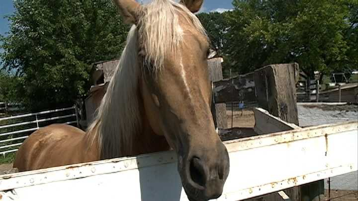 An equine therapy center dedicated to helping veterans and first responders could lose its home.