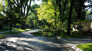 Tree damage near 58th and Webster