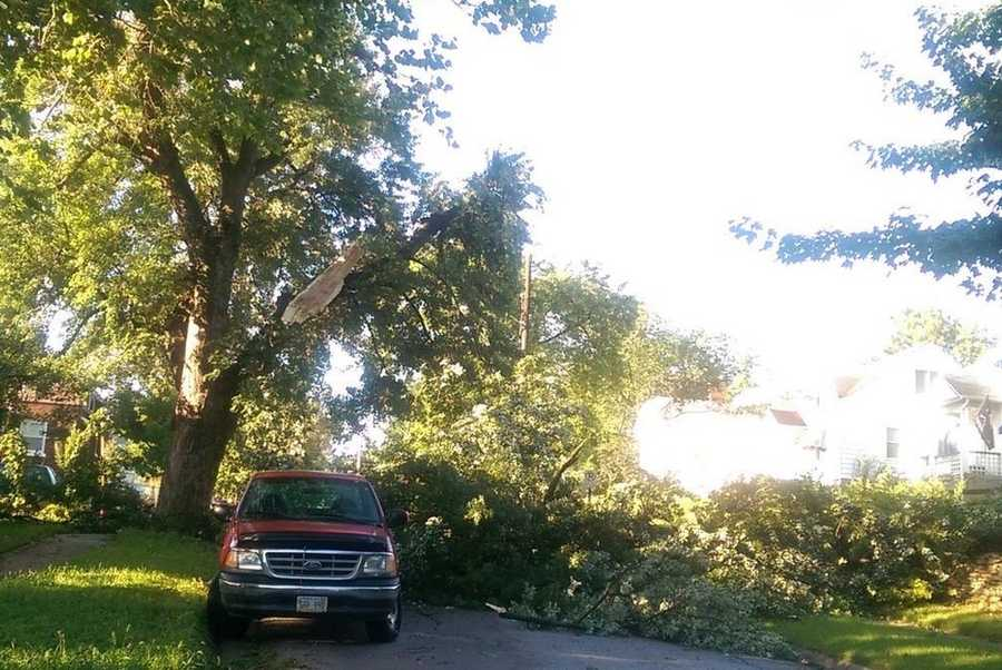 Tree damage near 45th & Pacific