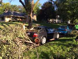 Tree damages vehicle near 63rd and Underwood