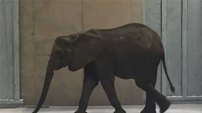 Omaha Zoo releases photo of one of six elephants which arrived Friday from Swaziland
