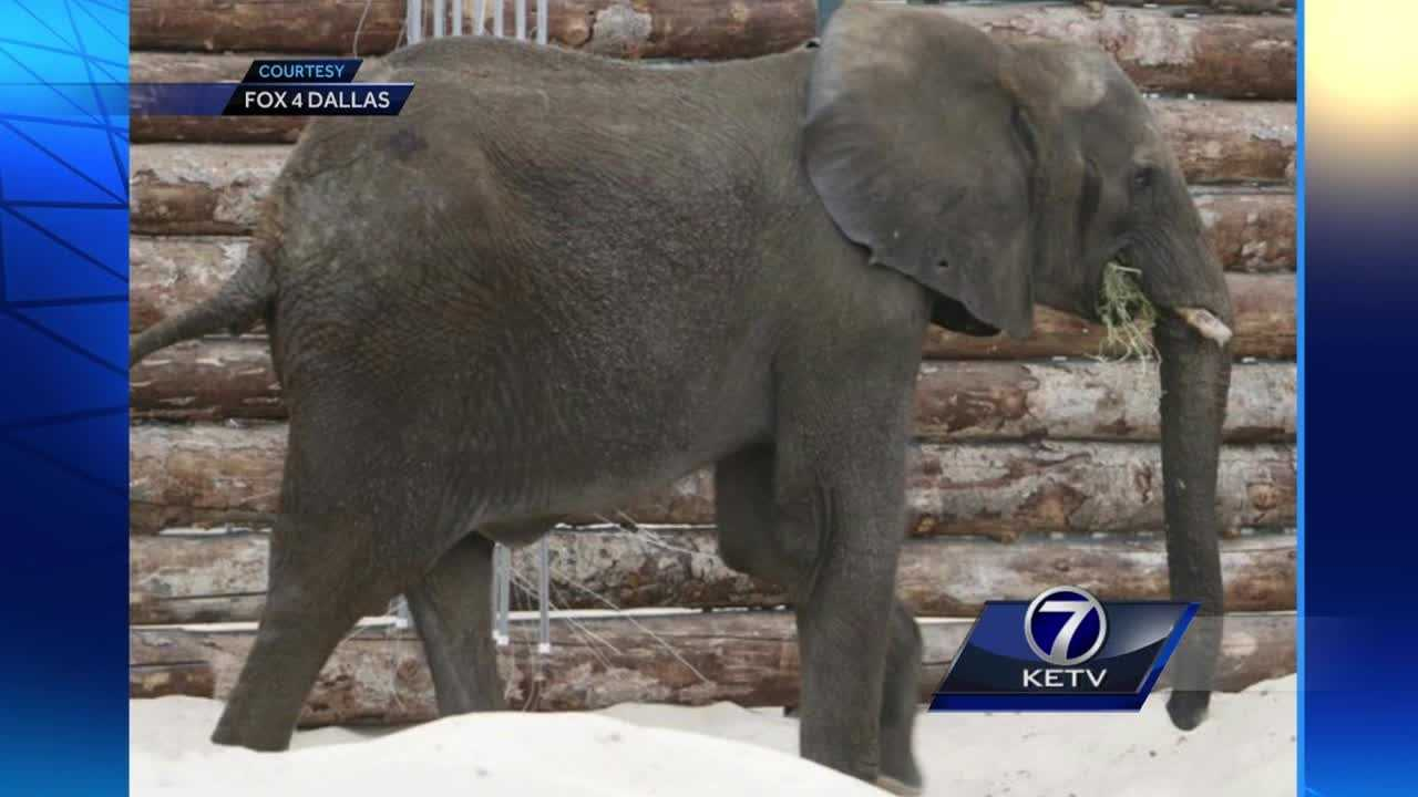 Six elephants spent their first night on U.S. soil at Omaha's Henry Doorly Zoo and Aquarium.