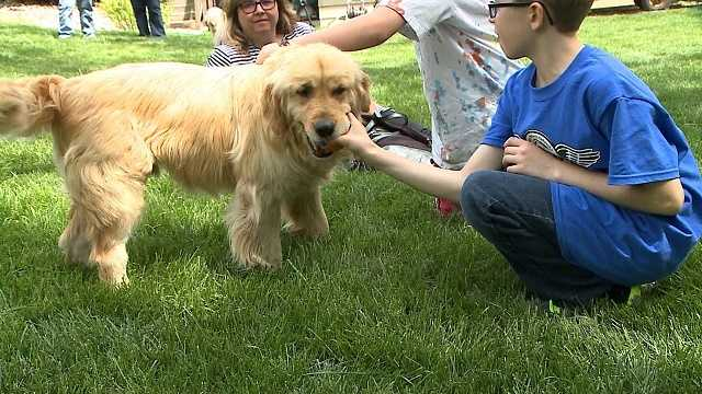 Golden retriever rescues travel from Turkey to Omaha