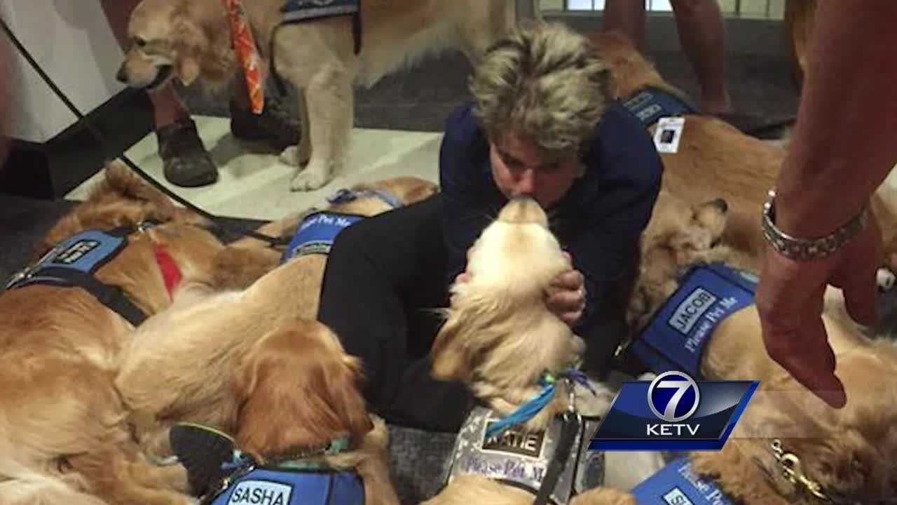 Comfort dogs from all over the country, including one from Fremont, are bringing smiles to a city mired in tragedy.