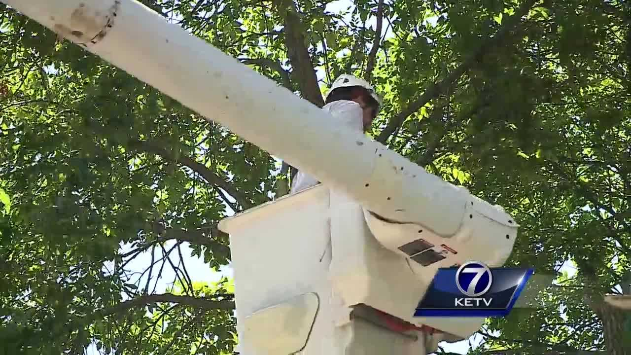 The emerald ash borer has already left its mark on Omaha, and it's putting the plan by the city to the test.
