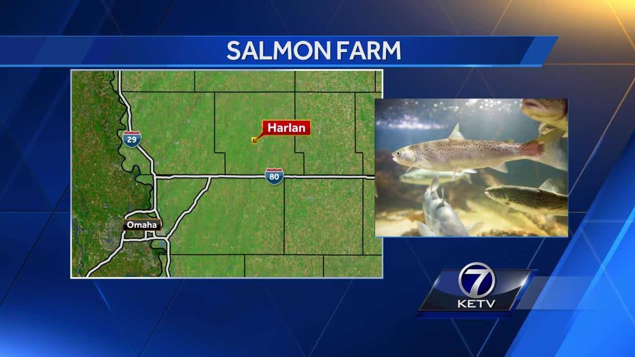A startup company thinks it can turn salmon into a cash crop next to an Iowa cornfield.