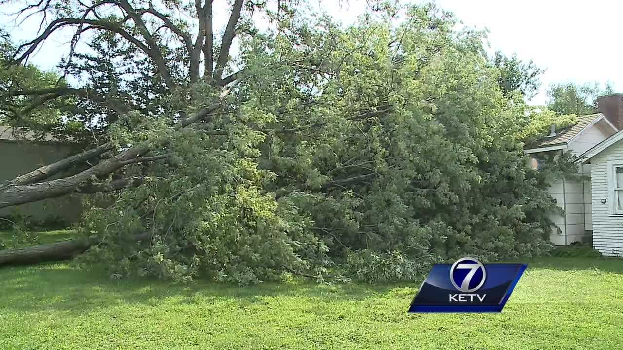 A tree collapsed and crushed a gas line, forcing people from their homes overnight.