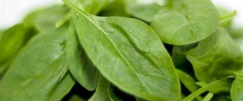 Spinach: This yummy vegetable can be eaten fresh, frozen, sauted or cooked! So many ways to enjoy. Spinach contains neoxanthin and violaxinthen to help with inflammation. Flavonoids, nutrients with anti-cancer properties, are abundant in spinach, according to health diaries. These have been show to slow down skin cancer cells. Spinach is a good source of vitamins B, C and E.