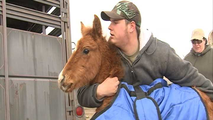 Deputies seize more than 20 horses from pasture
