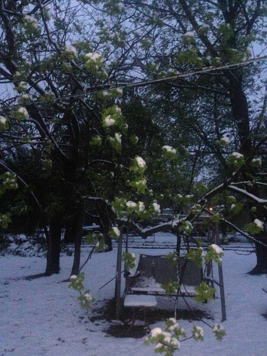 Snow in Gentry.