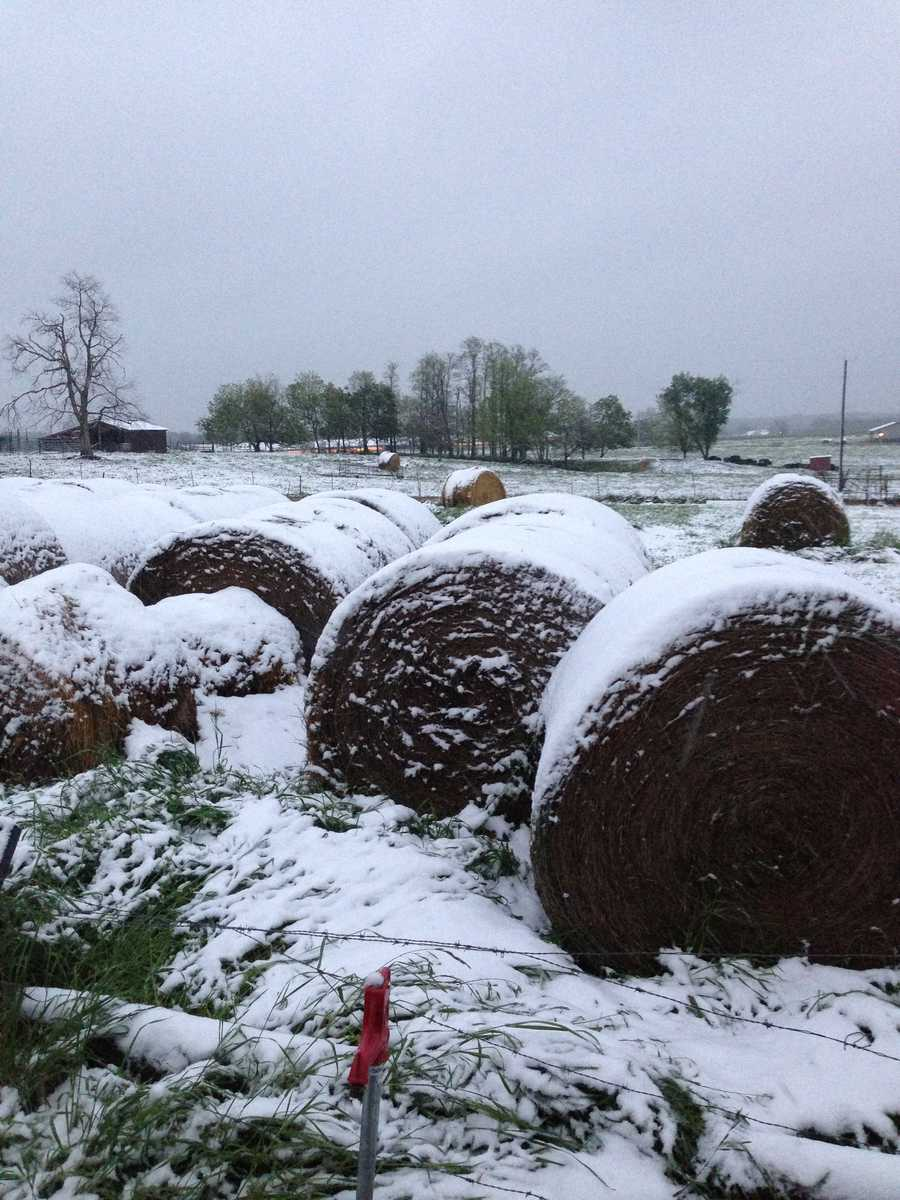 Snowy hay bales in Highfill.