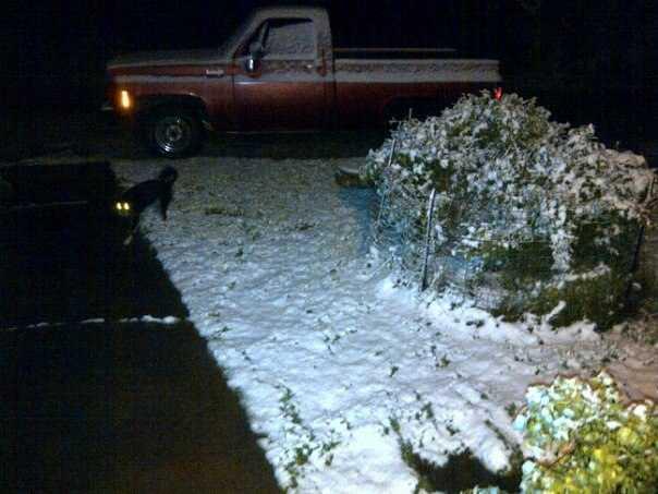 Snow in Pea Ridge.