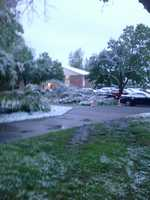 A snowy tree down in Rogers.
