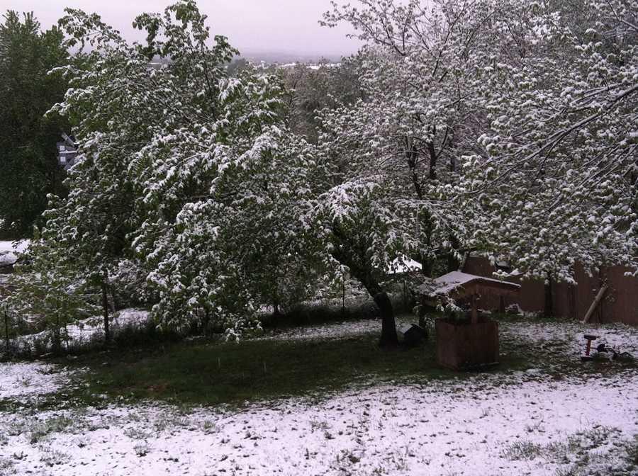 Snow in Springdale.