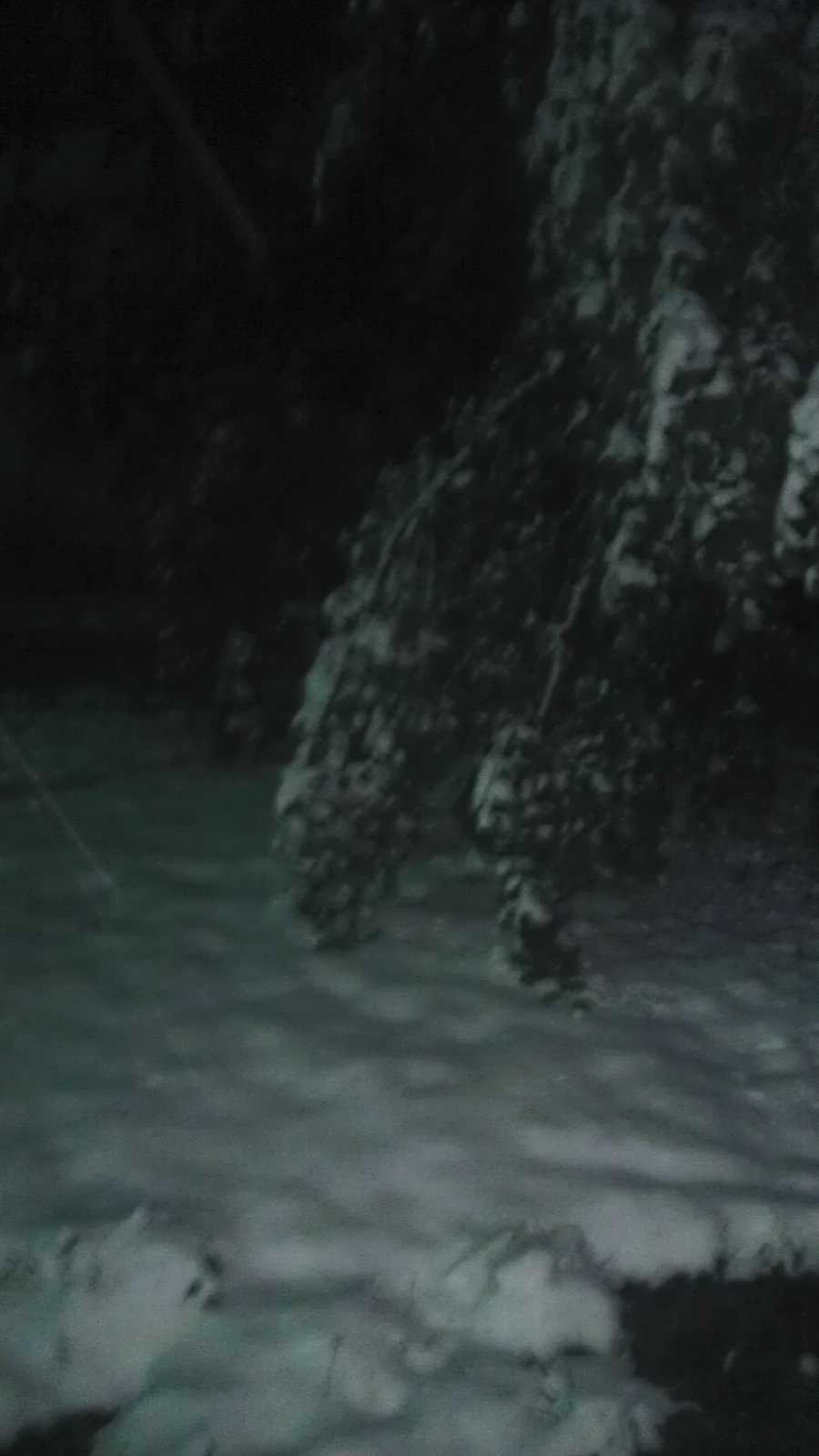 Snow weighing down the trees in Gentry.