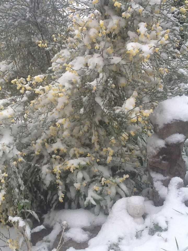 Snow in Eureka Springs.